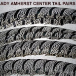Amherst_Tail_center