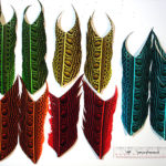 Dyed_Argus_Wing